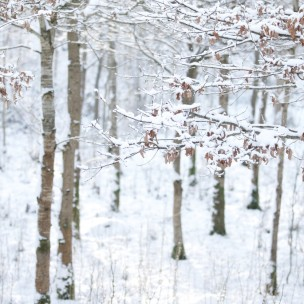 English Woodland Snow